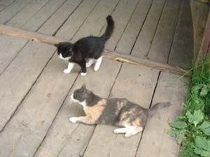 キリル・猫3.jpg